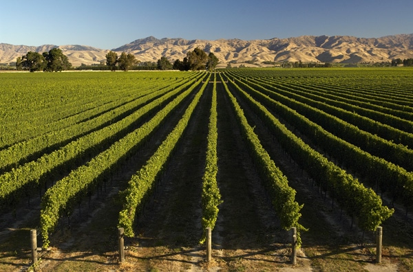 Marlborough Vineyards