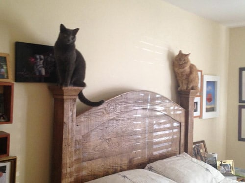 cat head board