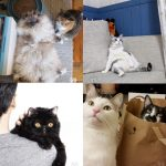 12 funny Instagram cats to adore