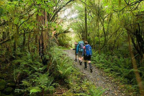 The Milford Track - a bush trek over several days with some of the world's most amazing scenery.