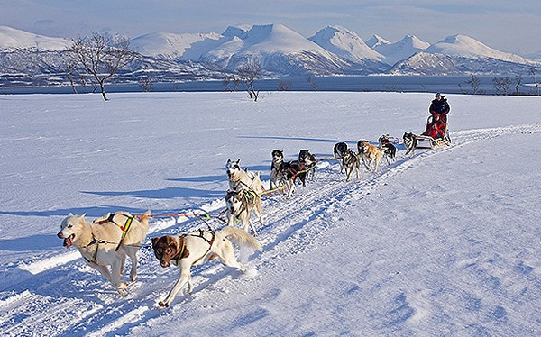Dog sled norway