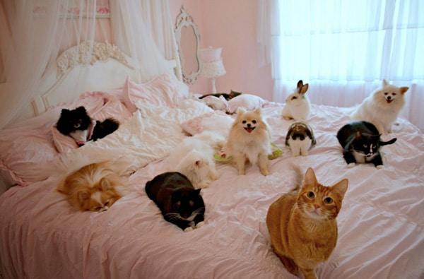 husdjur sängen